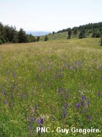 prairie fleurie natura 2000